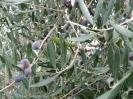 Impressionen aus Kreta